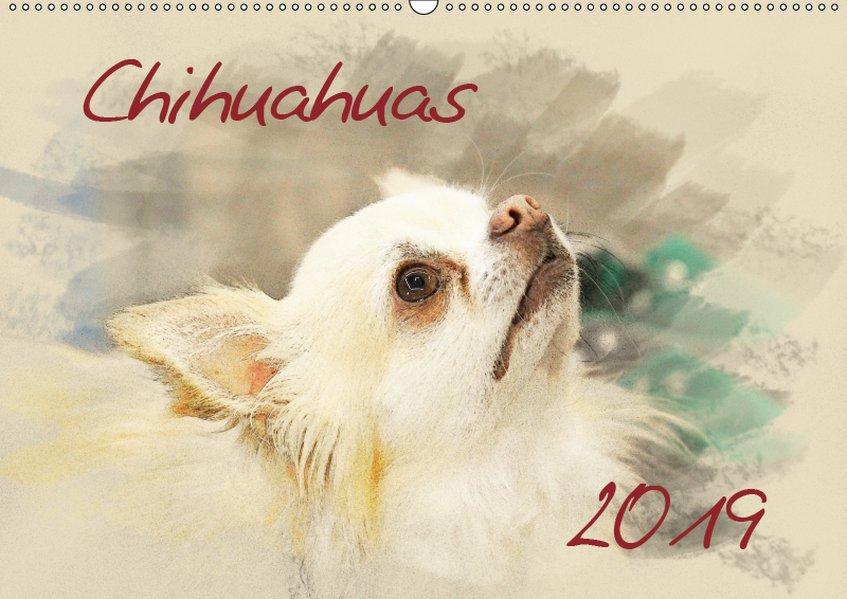 Chihuahuas 2019 (Wandkalender 2019 DIN A2 quer)