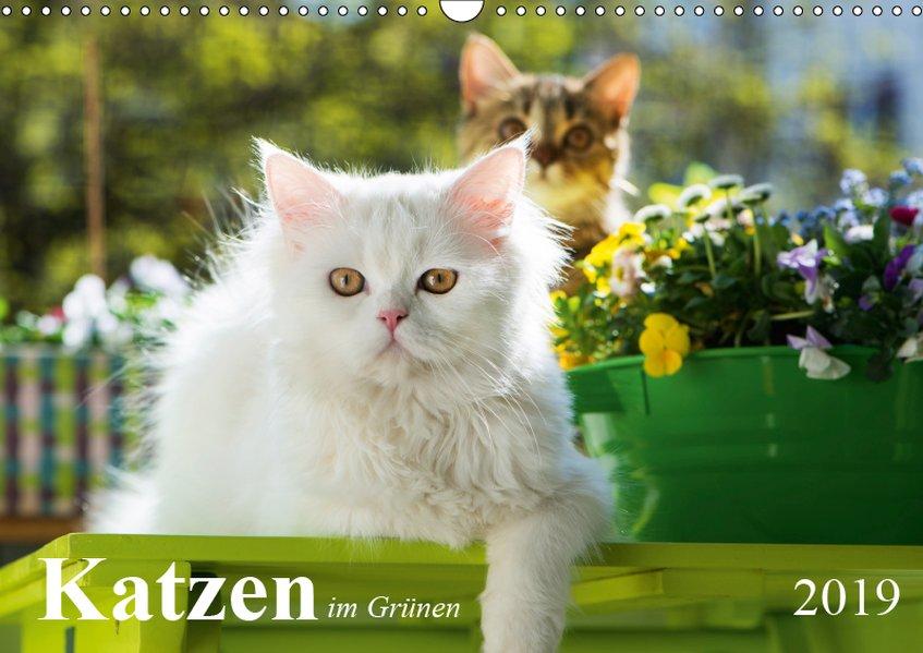 Katzen im Grünen (Wandkalender 2019 DIN A3 quer)