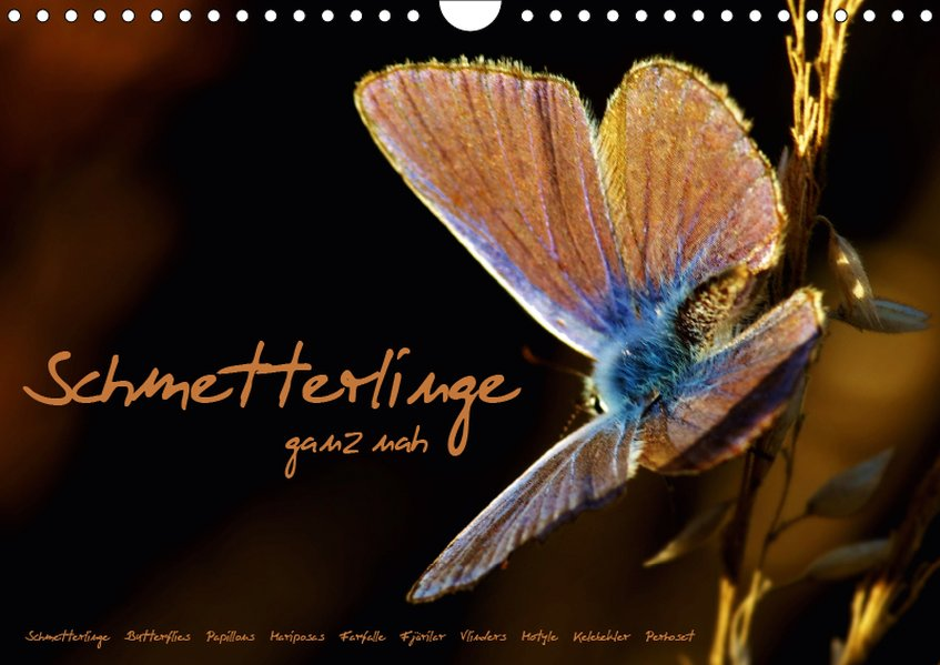 Schmetterlinge ganz nah (Wandkalender 2019 DIN ...