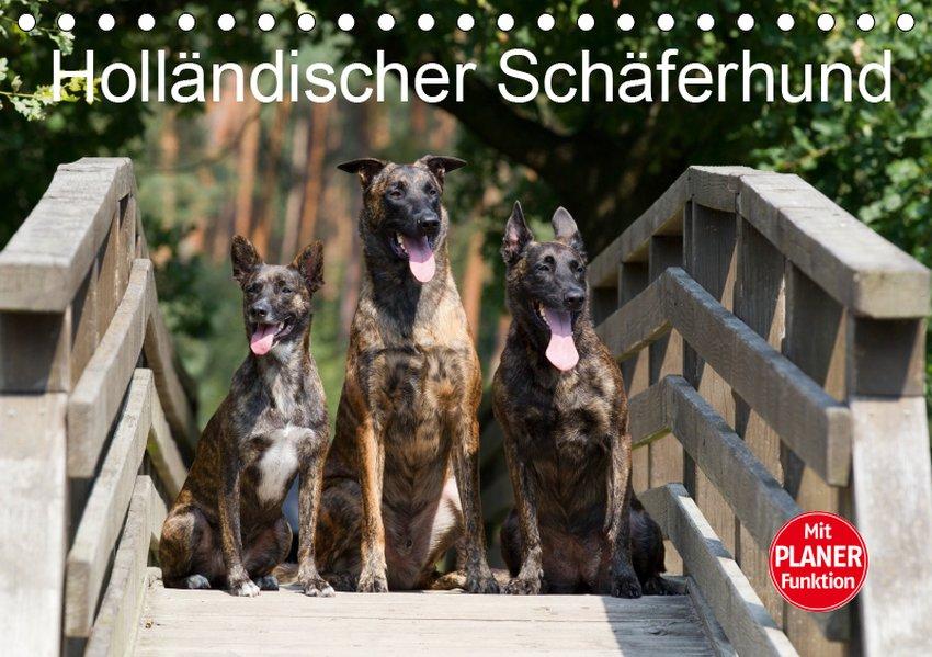 Holländischer Schäferhund (Tischkalender 2019 D...