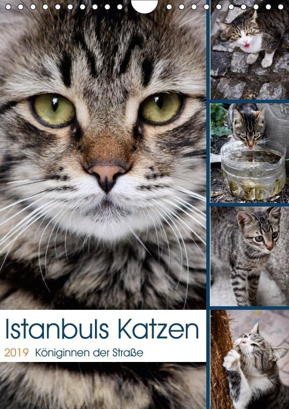 Istanbuls Katzen (Wandkalender 2019 DIN A4 hoch)