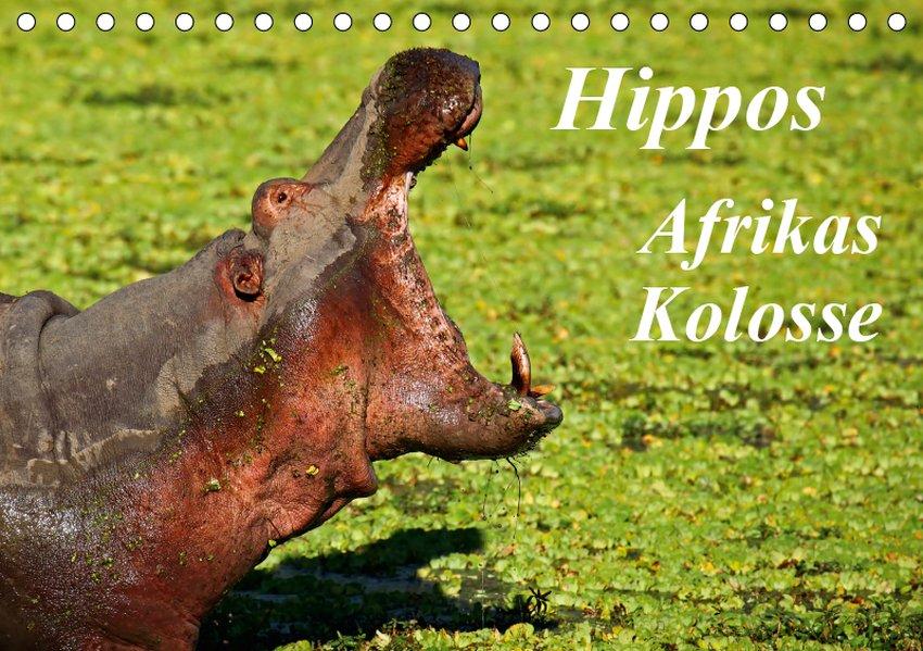 Hippos - Afrikas Kolosse (Tischkalender 2019 DI...