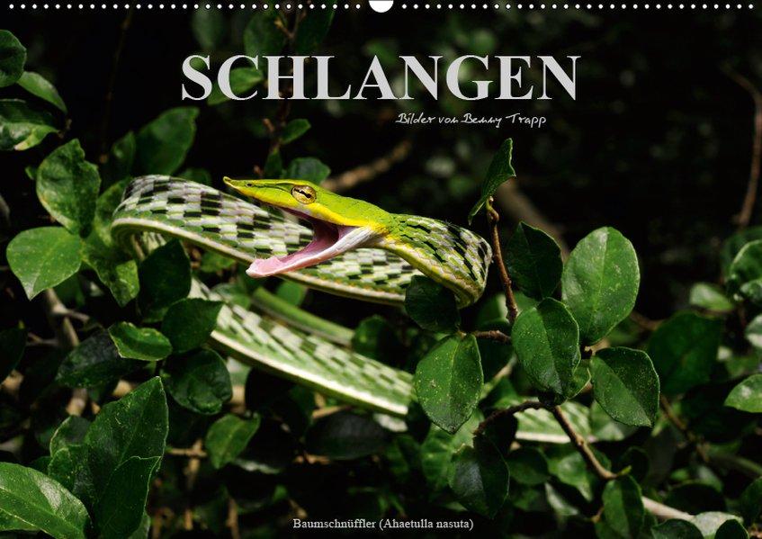 Schlangen (Wandkalender 2019 DIN A2 quer) als Kalender