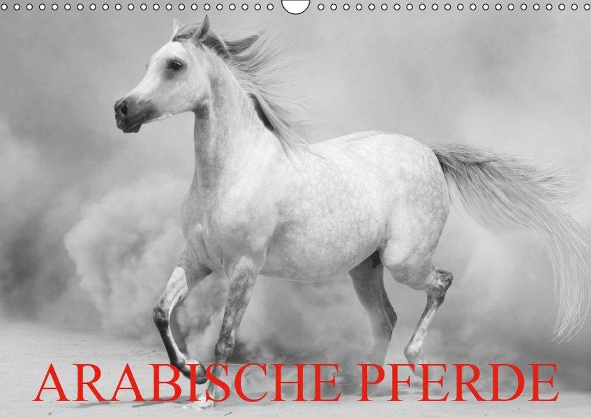 Arabische Pferde (Wandkalender 2019 DIN A3 quer)