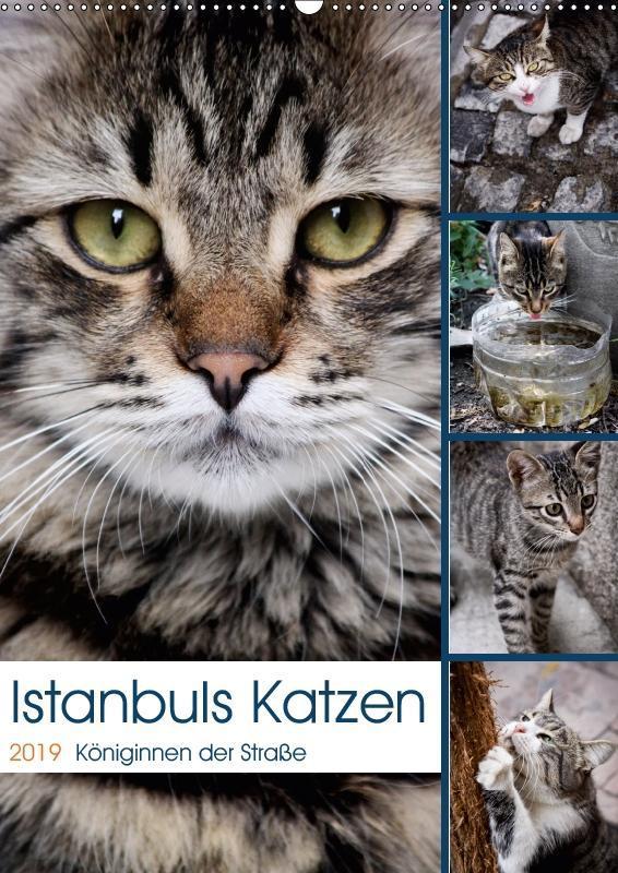 Istanbuls Katzen (Wandkalender 2019 DIN A2 hoch)