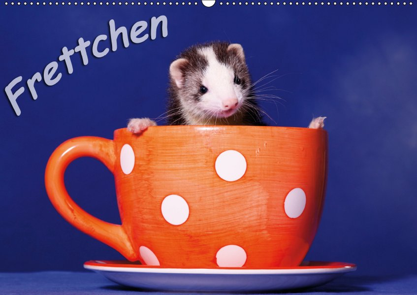 Frettchen - Ferrets (Wandkalender 2019 DIN A2 q...