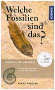 Welche Fossilien sind das?