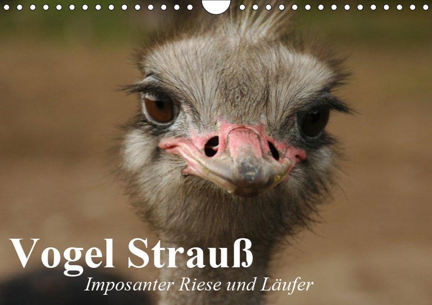 Vogel Strauß. Imposanter Riese und Läufer (Wandkalender 2019 DIN A4 quer) als Kalender