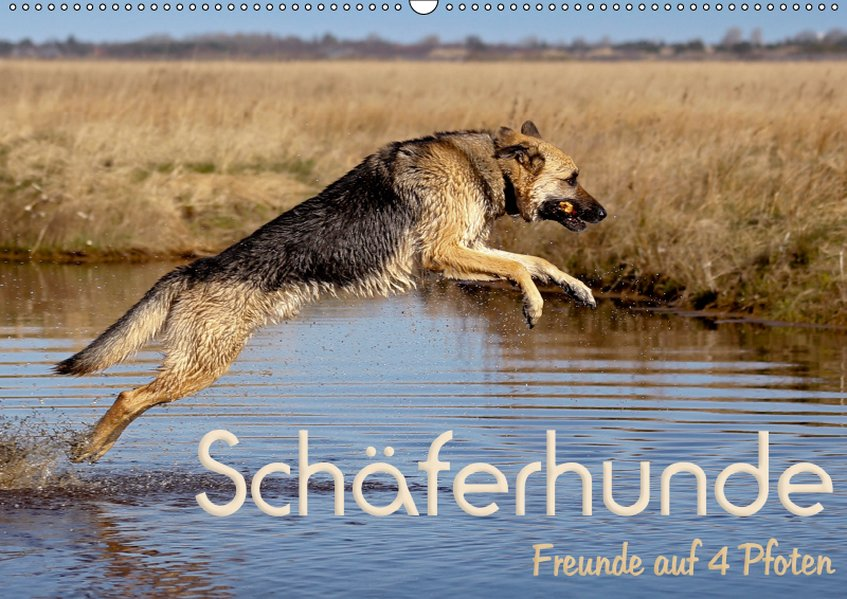 Schäferhunde - Freunde auf 4 Pfoten (Wandkalend...