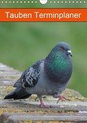 Tauben Terminplaner (Wandkalender 2019 DIN A4 hoch)