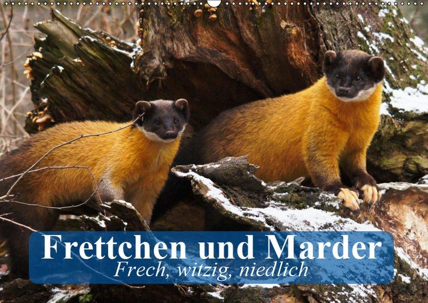 Frettchen und Marder. Frech, witzig, niedlich (...