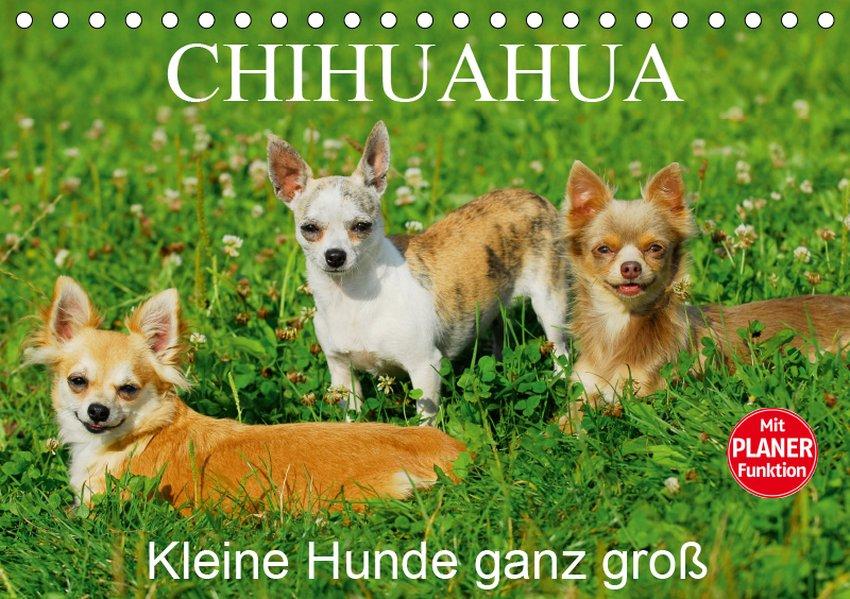 Chihuahua - Kleine Hunde ganz groß (Tischkalend...