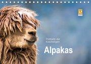 Portraits der kuscheligen Alpakas (Tischkalender 2019 DIN A5 quer)