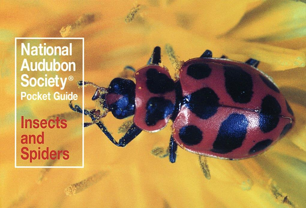 National Audubon Society Pocket Guide to Familiar Insects and Spiders als Taschenbuch