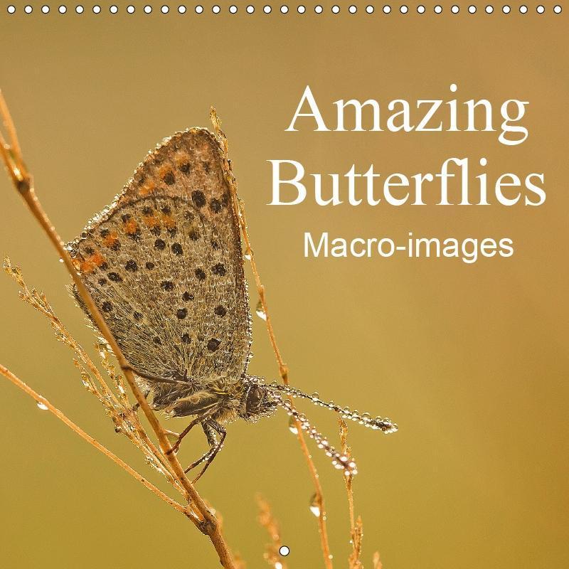 Amazing Butterflies Macro-images (Wall Calendar...
