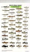 Mac's Field Guides: North American Freshwater Fish