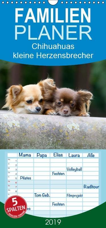Chihuahuas - kleine Herzensbrecher - Familienpl...