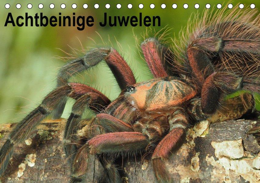 Achtbeinige Juwelen (Tischkalender 2019 DIN A5 ...