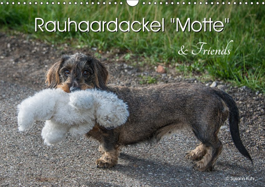Rauhaardackel Motte & Friends (Wandkalender 201...