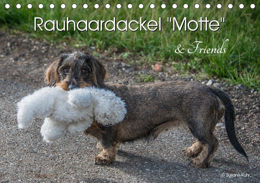 Rauhaardackel Motte & Friends (Tischkalender 20...