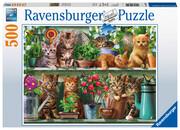 Katzen im Regal - Puzzle mit 500 Teilen