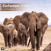 Elefanten 2020 Broschürenkalender