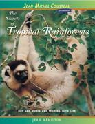 The Secrets of Tropical Rainforests: Hot and Humid and Teeming with Life