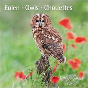 Eulen Owls 2020 - Broschürenkalender - Wandkalender - mit herausnehmbarem Poster