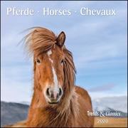 Pferde Horses 2020 - Broschürenkalender - Wandkalender - mit herausnehmbarem Poster