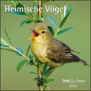 Heimische Vögel 2020 - Broschürenkalender - Wandkalender - mit herausnehmbarem Poster