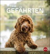 Hunde. Treue Gefährten 2020. Postkartenkalender