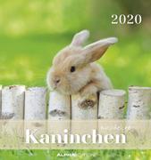 Kaninchen 2020 - Postkartenkalender (16 x 17) - Rabbits - zum Aufstellen oder Aufhängen - Geschenkidee - Tierkalender - Gadget