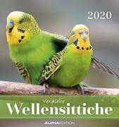 Wellensittiche 2020 - Postkartenkalender (16 x 17) - Budgerigars - zum Aufstellen oder Aufhängen - Geschenkidee - Tierkalender - Gadget