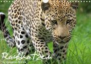 Raubkatzen (Wandkalender 2020 DIN A4 quer)