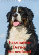 Faszination Berner Sennenhund (Wandkalender 2020 DIN A4 hoch)