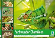 Farbwunder Chamäleon (Wandkalender 2020 DIN A4 quer)