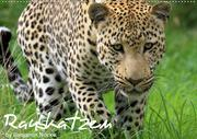 Raubkatzen (Wandkalender 2020 DIN A2 quer)
