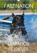 Faszination Labrador Retriever (Wandkalender 2020 DIN A3 hoch)
