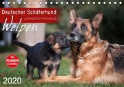 Deutscher Schäferhund - Welpen (Tischkalender 2020 DIN A5 quer)