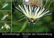 Schmetterlinge - Wunder der Verwandlung (Wandkalender 2020 DIN A4 quer)