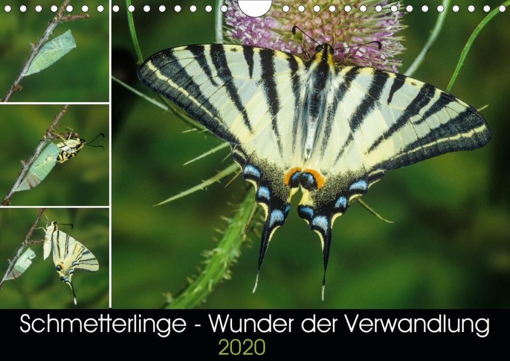 Schmetterlinge - Wunder der Verwandlung (Wandkalender 2020 DIN A4 quer) als Kalender