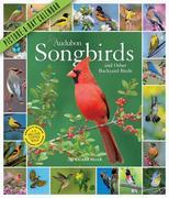 2020 Audubon Songbirds and Other Backyard Birds Picture-A-Day Calendar