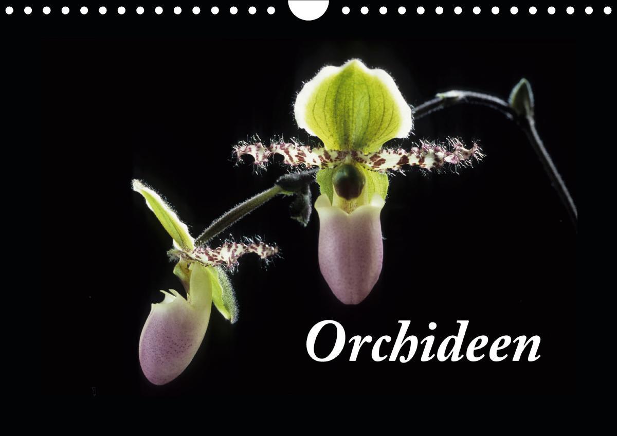 Orchideen 2021 (Wandkalender 2021 DIN A4 quer) als Kalender