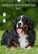 Berner Sennenhund 2021 (Wandkalender 2021 DIN A4 hoch)