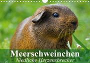 Meerschweinchen Niedliche Herzensbrecher (Wandkalender 2021 DIN A4 quer)