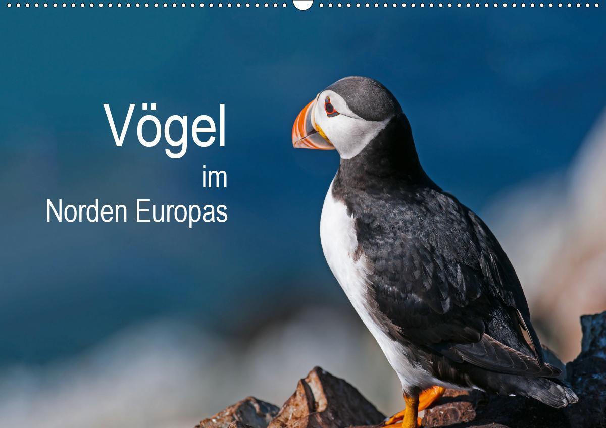 Vögel im Norden Europas (Wandkalender 2021 DIN A2 quer) als Kalender