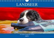 Landseer - Ein starker Freund auf 4 Pfoten (Wandkalender 2021 DIN A4 quer)