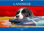 Landseer - Ein starker Freund auf 4 Pfoten (Wandkalender 2021 DIN A3 quer)