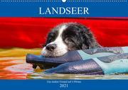 Landseer - Ein starker Freund auf 4 Pfoten (Wandkalender 2021 DIN A2 quer)