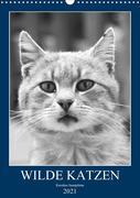 Wilde Katzen - Korsikas Samtpfoten (Wandkalender 2021 DIN A3 hoch)